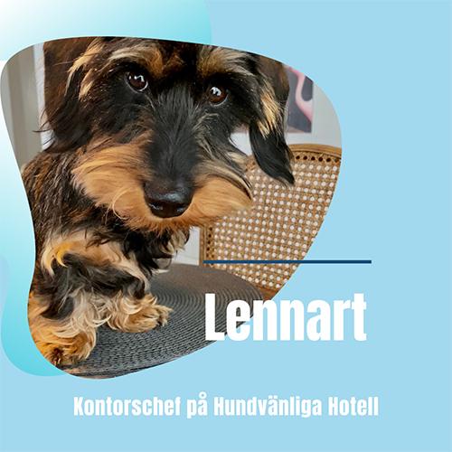 Hundvänliga Hotell på Gotland